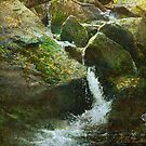 waterfall with dipper by R Christopher  Vest