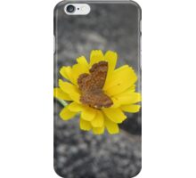 Fatal Metalmark Butterfly on Yellow Wildlfower iPhone Case/Skin