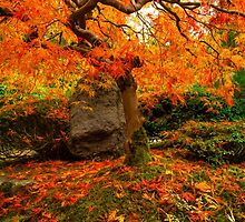 Autumn Ablaze by Brandt Campbell
