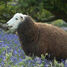 The Herdwick by Lou Wilson