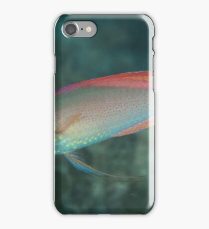 Red-margined Fairy Wrasse iPhone Case/Skin