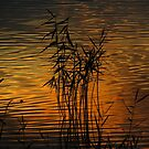 Sunset reflections by Mortimer123