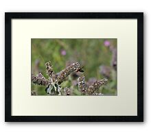 flower with insect Framed Print