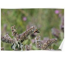 flower with insect Poster
