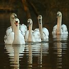 Follow the leader by Lyn Evans
