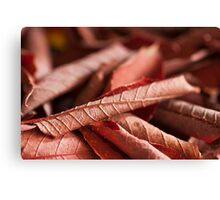 Dried Rolled Plum Leaves - Macro Canvas Print