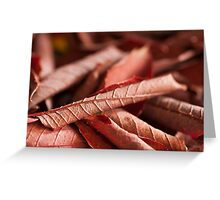 Dried Rolled Plum Leaves - Macro Greeting Card