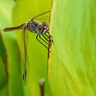 Dragonfly on bright leaves by lynn carter
