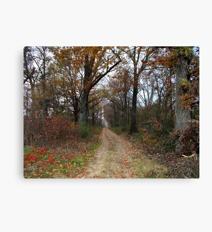 Favorite Trail Canvas Print