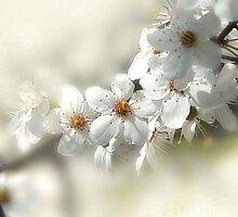 Blooming White by Danuta Antas