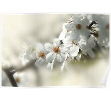 Blooming White Poster