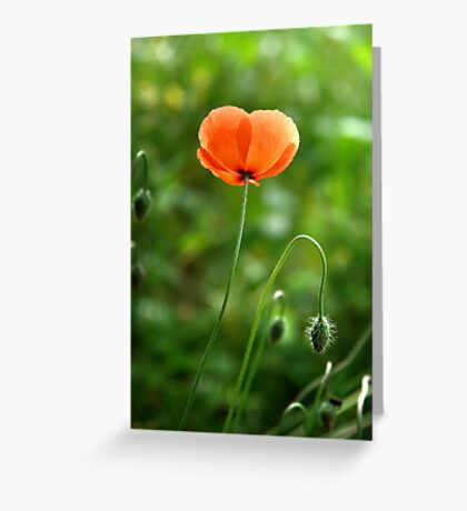 Red Poppy Flower in the Field Greeting Card