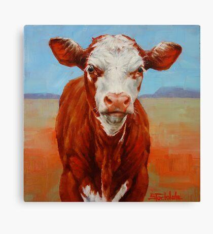 Calf Stare Canvas Print
