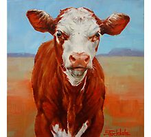Calf Stare Photographic Print