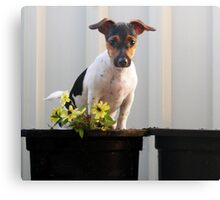 Potted Millie Canvas Print
