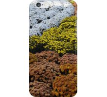 Colorful Garden, Central Park South, New York City iPhone Case/Skin
