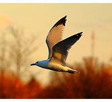 Free Bird Photographic Print