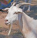 Billy Goat Gruff by Graeme  Hyde