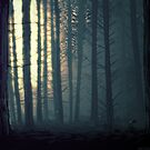 Waldeinsamkeit by Aimee Cozza