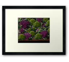 BEAUTIFUL PURPLE & GREEN CAULIFLOWER-PICTURE,TOTE BAG,TRAVEL MUGS,PILLOWS..ECT.. Framed Print
