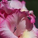 Pink Gladiolus  by Joy Watson