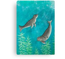 Playful Seals Canvas Print
