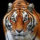 Looking into my Eyes Kuala Lumpur Zoo  by sandysartstudio