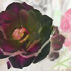 Inverted Rose by Margaret Stevens