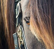 Soft Gaze by SD 2010 Photography & Equine Art Creations