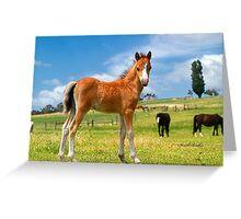 Welsh Mountain Foal Greeting Card