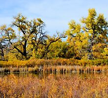 Cherry Creek Pond in Autumn  by Robert Meyers-Lussier