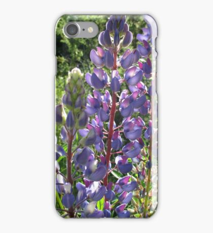 Late Afternoon Lupins iPhone Case/Skin