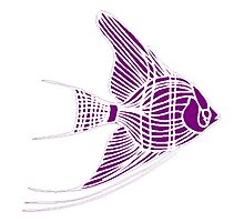 Purple Angel Fish Photographic Print