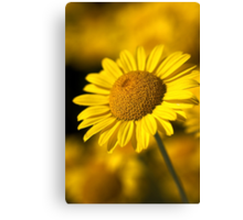 Hot in the Sun Canvas Print