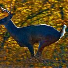 High Tailin' White Tail by sundawg7