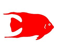 Red Angel Fish Photographic Print