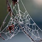 Frozen spiderweb by annalisa bianchetti