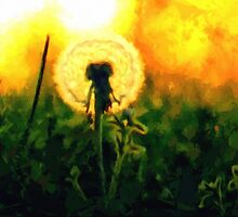 Dandelion Flower Sunset Sunrise by druidwolfart