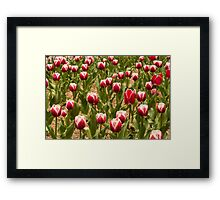 Leen Van Der Mark Tulips Framed Print