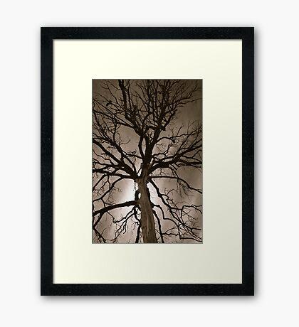 Spooky Tree Framed Print