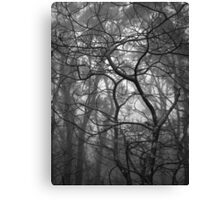 Scary Trees- Pimpala Track Canvas Print