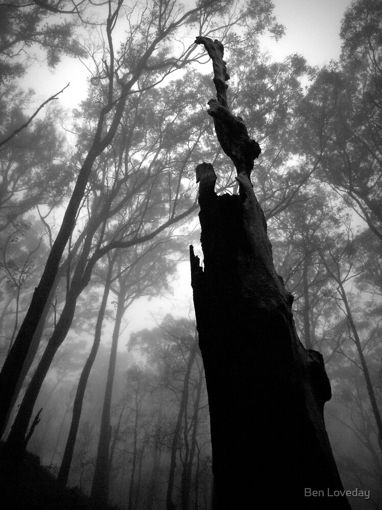 Scary Tree- Wine Shanty Track. by Ben Loveday
