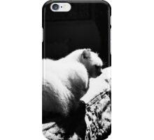 Cat and dog iPhone Case/Skin