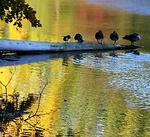On Golden Pond by Gilda Axelrod