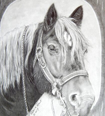 French Percheron Draft Horse Work Sticker