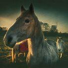 White Horses by Nigel Bangert