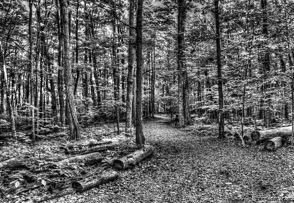 Forest 4 by John Velocci