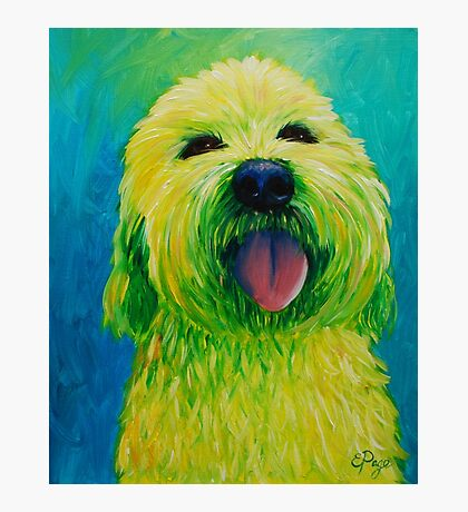 Shaggy Dog in Yellow Photographic Print