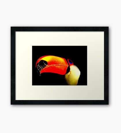 Toco Toucan Two Framed Print