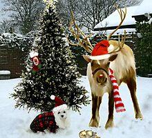 Snowdrop & Rudolph by Morag Bates